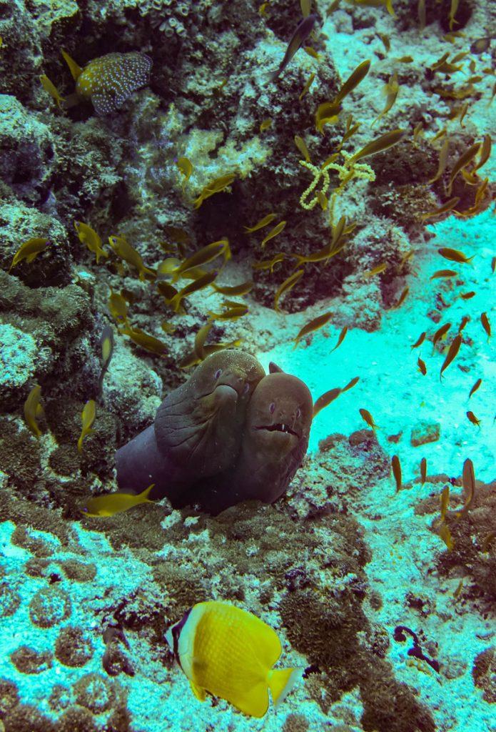 Blue Force One Maldives