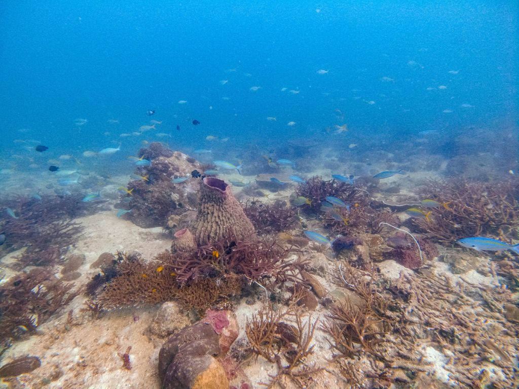 Diving in Koh Lipe