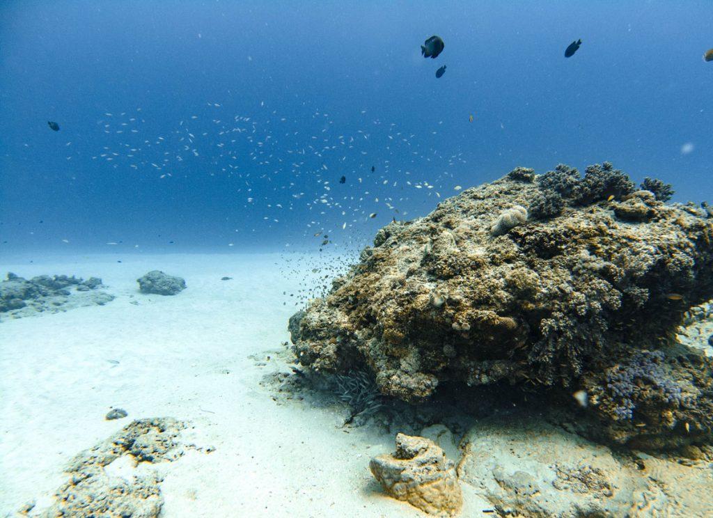 Ti Corail dive site Mauritius