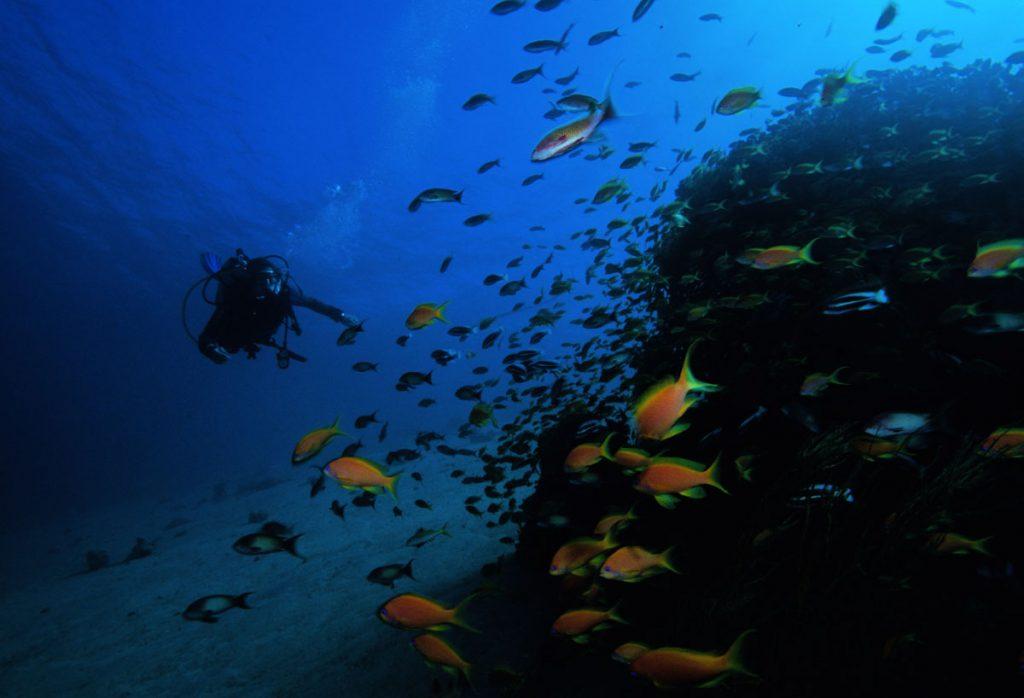 Aqaba scuba diving