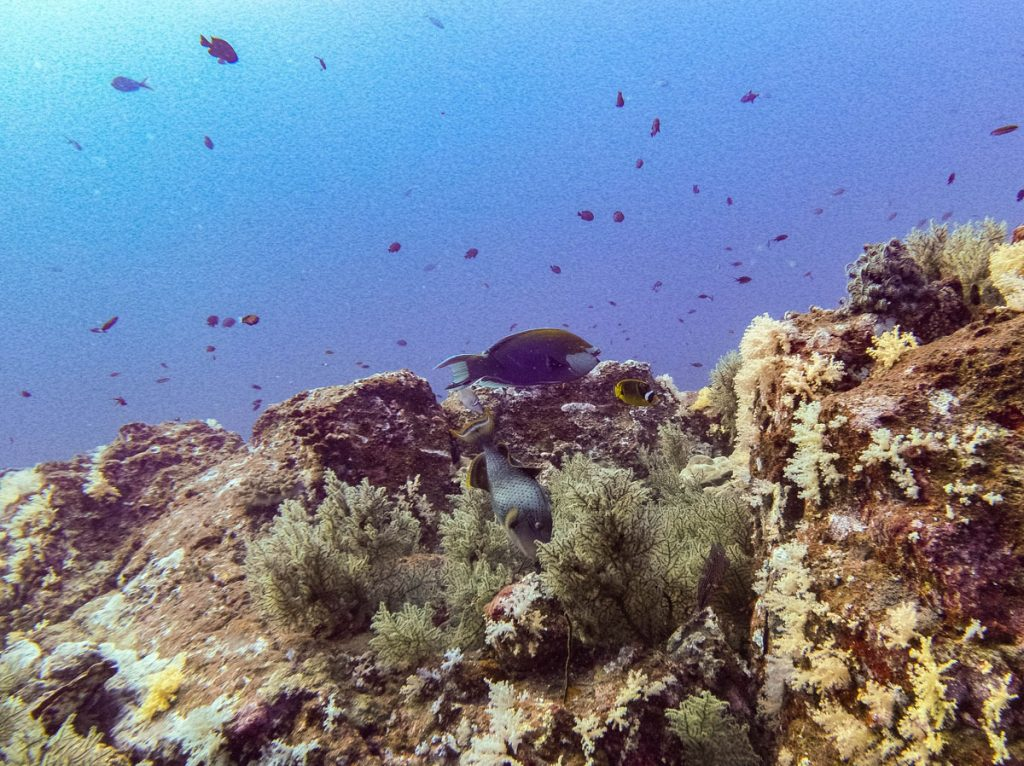 Fish at koh bon dive site