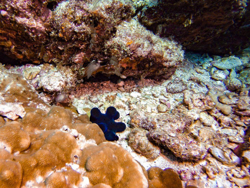 nudibranch at koh bon reef