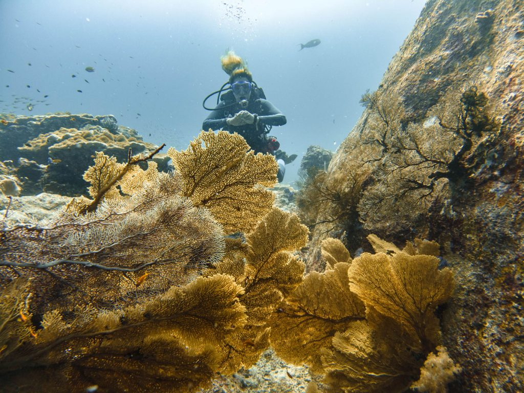 diver behind coral fans at tachai pinnacle dive site