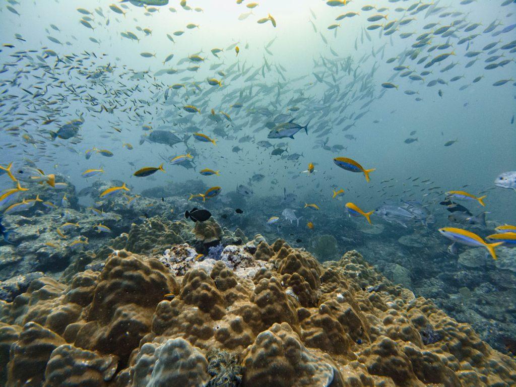 tachai pinnacle dive site