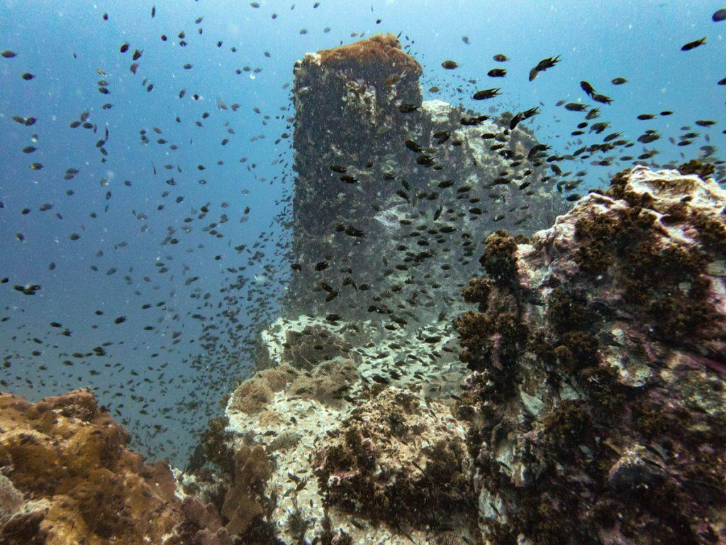 Rocks and reef fish at Chumphon Pinnacle