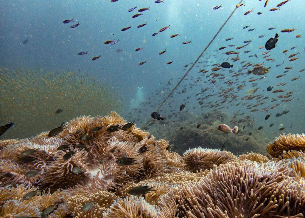 Coral and reef fish at Chumphon Pinnacle
