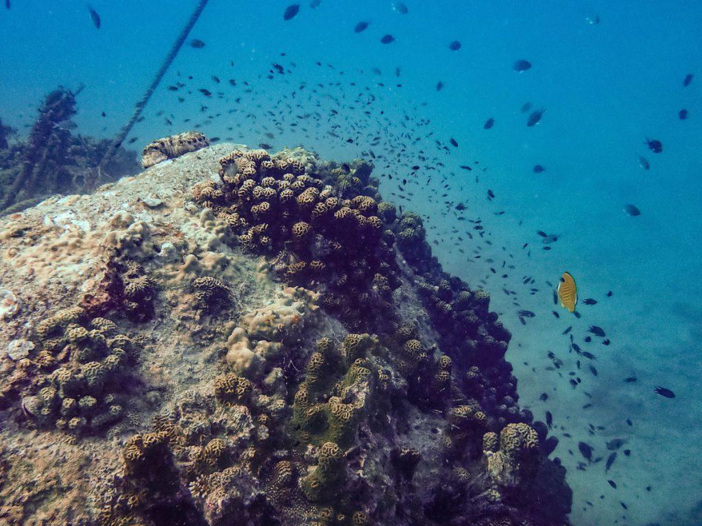 Rock and reef fish at Mango Bay